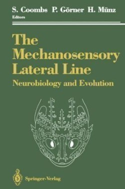 Mechanosensory Lateral Line